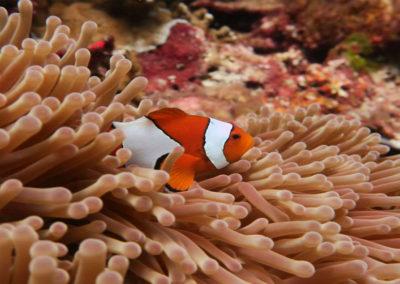 nautilus-phuket-diving-kata-beach-thailand-10
