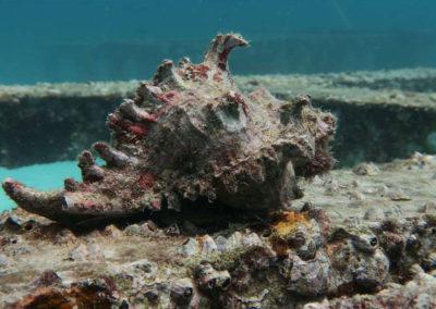 nautilus-phuket-diving-kata-beach-thailand-13