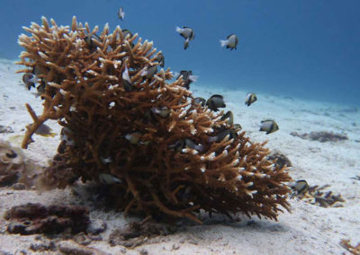 nautilus-phuket-diving-kata-beach-thailand-14