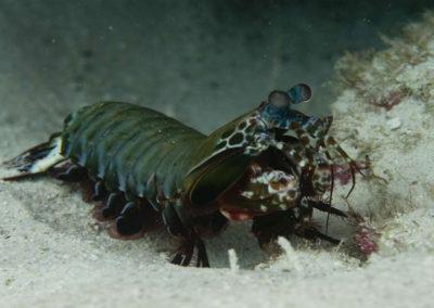 nautilus-phuket-diving-kata-beach-thailand-15