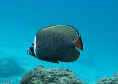 nautilus-phuket-diving-kata-beach-thailand-18