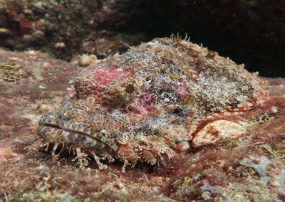 nautilus-phuket-diving-kata-beach-thailand-19