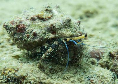 nautilus-phuket-diving-kata-beach-thailand-3