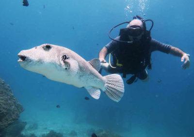 nautilus-phuket-diving-kata-beach-thailand-8