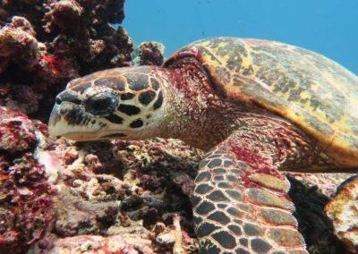 nautilus-phuket-diving-kata-beach-thailand-9