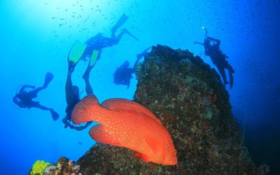 Time to explore the breathtaking world below the sea-level – Come dive with us