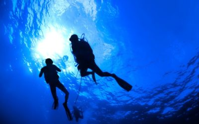 Dive in on our daily dive excursions
