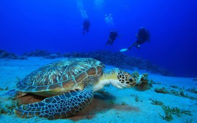 The best time to go diving in Phuket