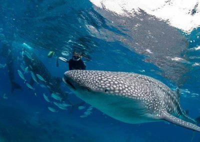 Diving at Surin island