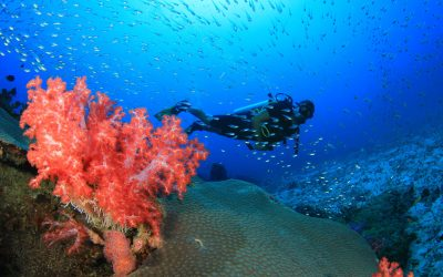 Dive into a new world – experience new species