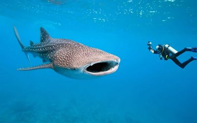 Diving in Phuket – Discover a magical world