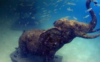 Top diving spot recommendations